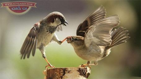 عکس زیبا و با مزه - وقتی خانم ها زیاد حرف می زنن