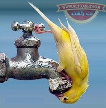 راهکارها ساده برای صرفه جویی در مصرف آب