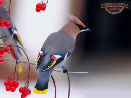 عکس های خیلی خوشگل از پرنده های خیلی خوشگل