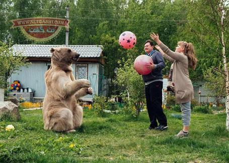 دوستی خاله خرسه، زندگی زوج روسی با یک خرس غول پیکر