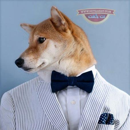 سگ مانکنی که ماهیانه 60 میلیون درآمد دارد+ عکس