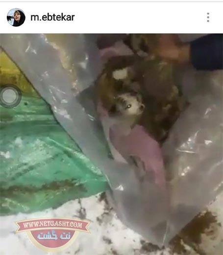 آب، برق و نفس مردم خوزستان قطع شده اما اولویت با توله سگ هاست!