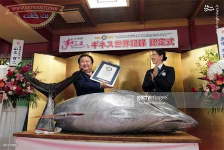 گرانترین ماهی دنیا به وزن 222 کیلوگرم فروخته شد