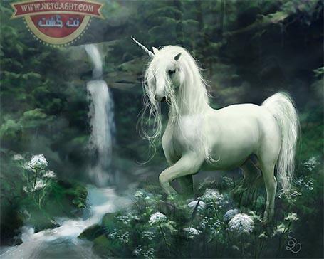 اسب بالدار تک شاخ - این موجود افسانه ای از کجا آمده است؟