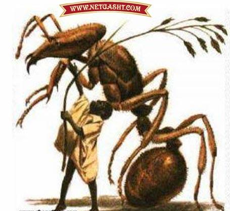 آبانوا، عکس آبانوا، در افسانه های  زولو (آفریقا)، افسانه ای درباره انسانهای بسیار کوچک و مینیاتوری وجود دارد که میتوانند زیر چمن مخفی شوند و مورچهسواری کنند