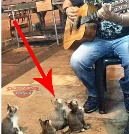 حیوانات موسیقی را می فهمند - عکس