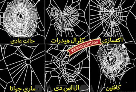 عکس تارهای عنکبوت تنیده شده توسط عنکبوت های معتاد به انواع مخدرها