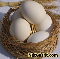 دلیل بیضوی بودن تخم مرغ ؟
